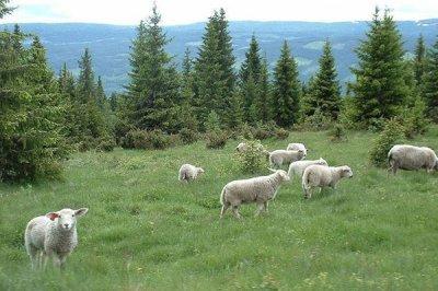 常见的几种饲料Yabo888类型以及它们给家畜带来的影响