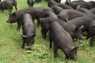 饲料Yabo888厂家为您介绍,养殖场常用的消毒剂
